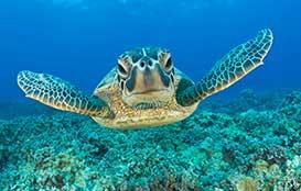 Renta de yates en Cancun, In-Ha, Tortugas, tour de snorkel en la bocana yate sea ray de 40 pies, 4 Horas
