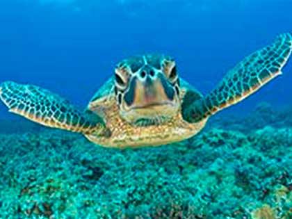 Renta-de-yates-en-Cancun-In-Ha-nado-con-tortugas, charter privado, puerto aventuras, our de snorkel, playa, barco, yate de lujo, catamran de 36 pies