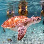 El mejor tour de snorkel en catamaran en Tulum