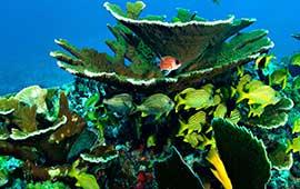 Renta de yates en Cancun, tour de snorkel, El Cielo, Cozumel, yate sea ray de 40 pies, palancar