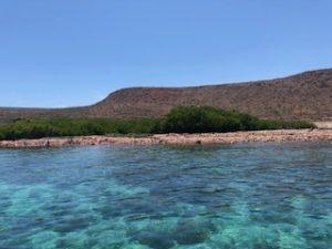 Renta de yates en la paz, isla espiritu santo