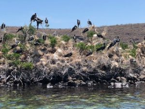 Renta de yates en la paz, isla espiritu santo, Tijeretas aves